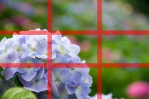 三分割構図で紫陽花を撮る方法を解説