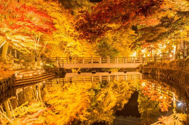 超広角レンズで撮影した紅葉