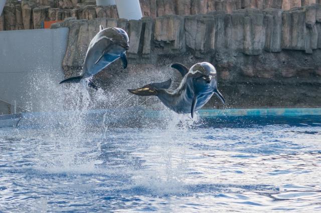 シャッタースピードを速くしてイルカを撮る