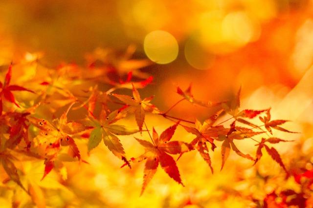 紅葉を撮影